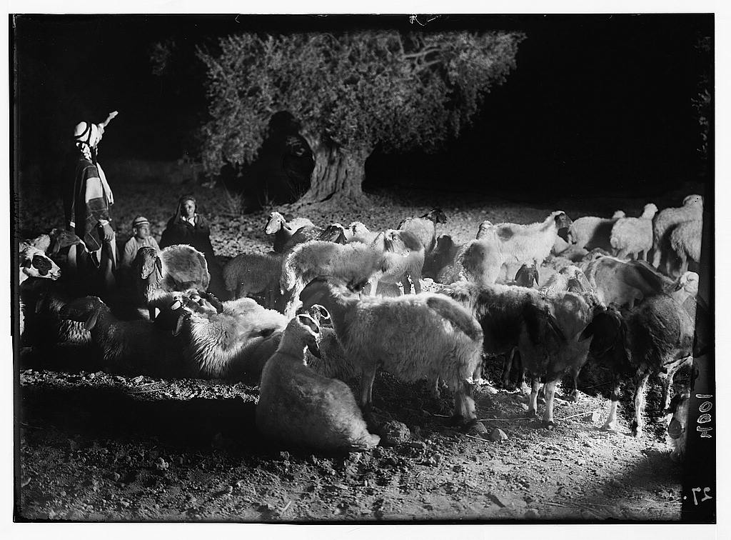 Agriculture, etc. Shepherd scenes. Sheep at night. Pastoral night scene in open fields near Bethlehem